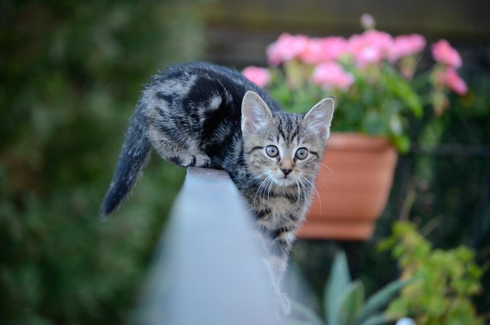 Katze6